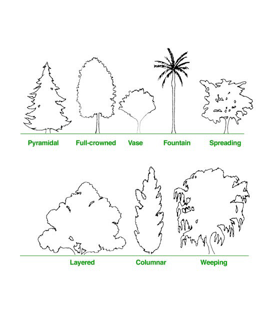 Tree-Characteristics-Counts-Arbor-Expertise-in-Orange-County-CA